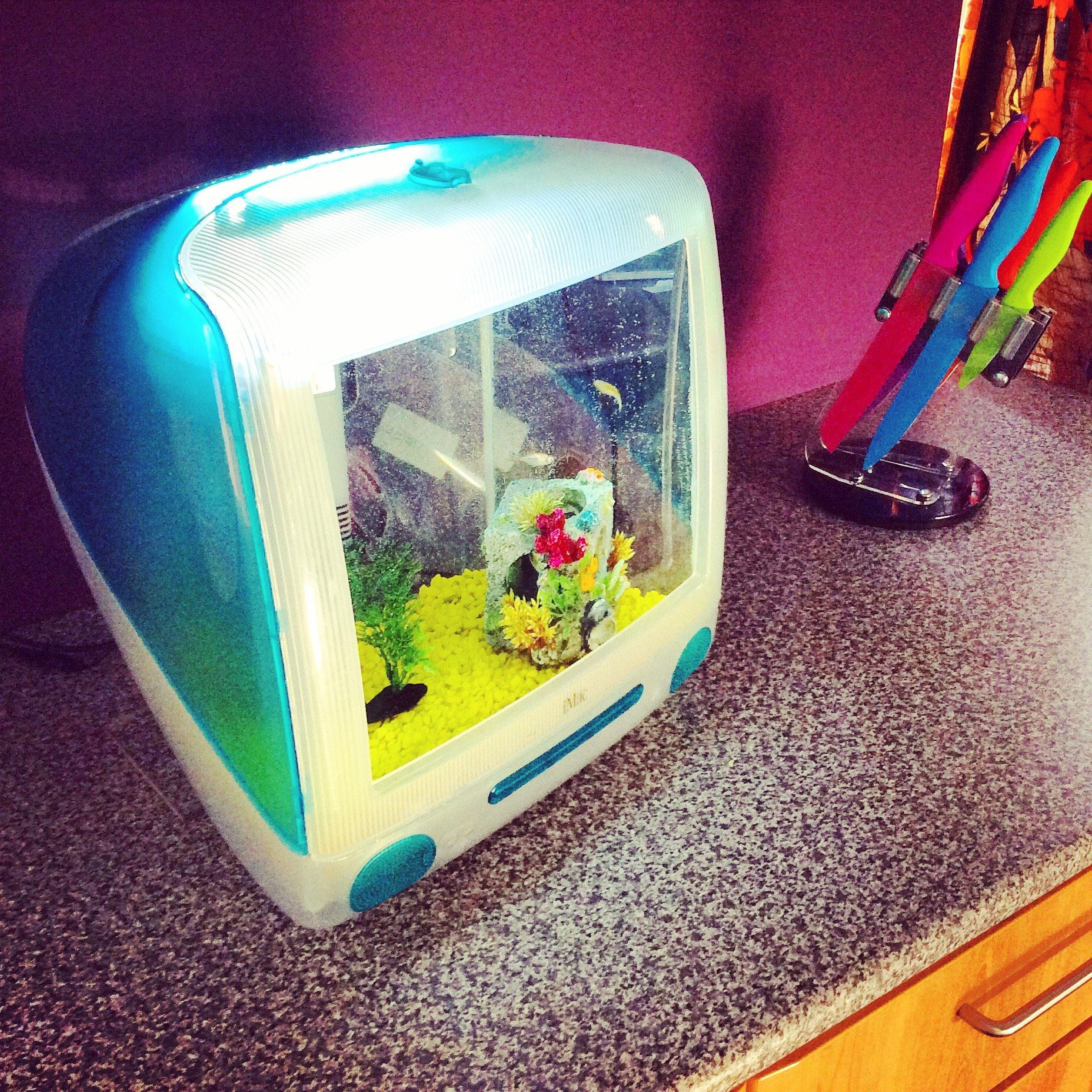 An old G3 iMac upcycled into an aquarium - the Imacquarium